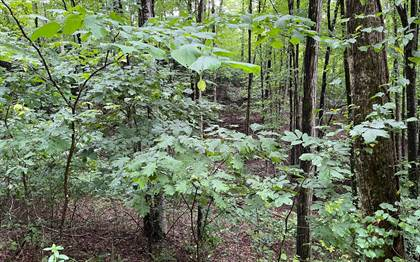 Lots And Land for sale in 45AC MOUNTAIN HARBOUR Lot 45 A-C, Hayesville, NC, 28904
