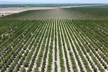 Farm And Agriculture for sale in 0 W American Avenue, Kerman, CA, 93630