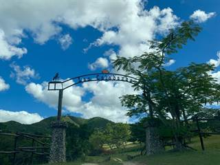 Farm And Agriculture for sale in 39.2 interior PR 14 Hacienda Las Calabazas, Coamo, PR, 00769