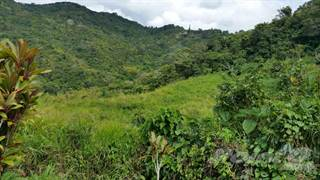 Farm And Agriculture for sale in Cuyon carretera 162, Cuyon, PR, 00705
