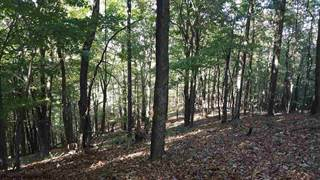 Farm And Agriculture for sale in 82.41 AC STATE ROAD RUN Road, Fairview, WV, 26570