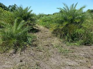 Farm And Agriculture for sale in 000 Main Street, Mims, FL, 32754